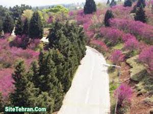 Forest-Park-Tehran-Sorkhehesar-www.sitetehran.ir-05