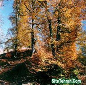 Park-Wild-luyzan-Tehran-sitetehran.com-03