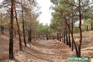 Photos-of-Forest-Park-Tehran-Cheetgar-sitetehran.com-02