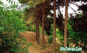 Photos-of-Forest-Park-Tehran-Cheetgar-sitetehran.com-04