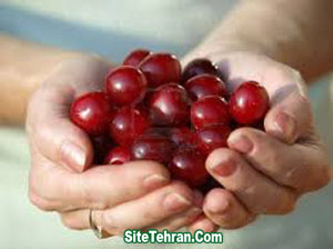 Pictures-of-cherry-fruit-sitetehran.com-02
