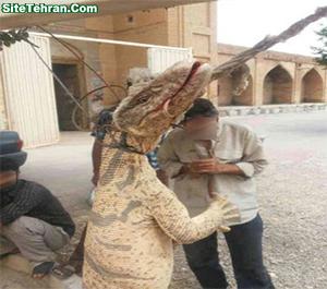 Lizard-sitetehran-com