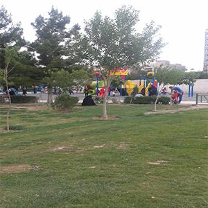 Olive Park-04