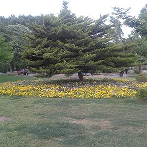 Olive Park-06