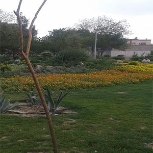 Olive Park-sitetehran-05